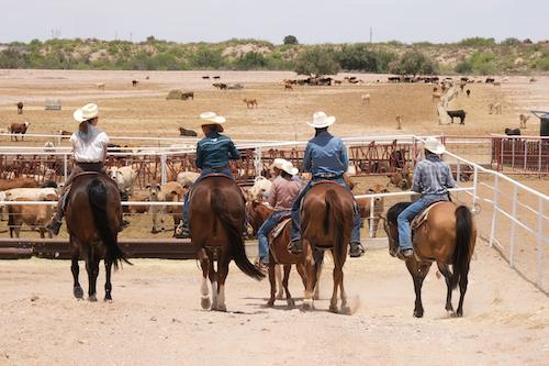 Pati Jinich herding cows. (Santa Teresa, NM)